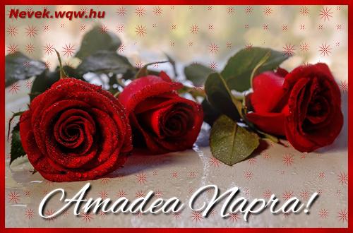 Névre szóló képeslap Amadea napra