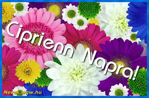 Színes virágok Ciprienn névnapra
