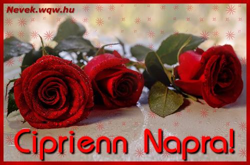 Névre szóló képeslap Ciprienn napra