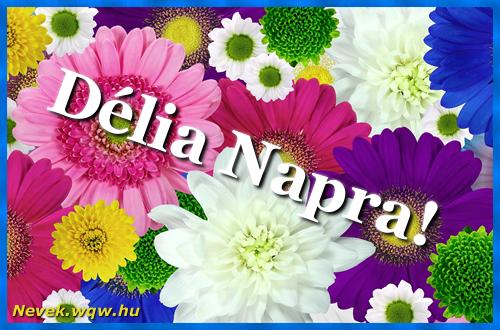 Színes virágok Délia névnapra
