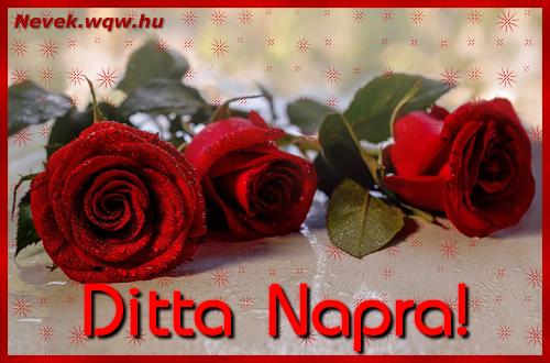 Névre szóló képeslap Ditta napra