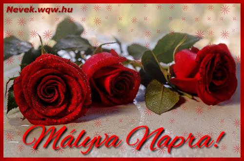 Névre szóló képeslap Mályva napra