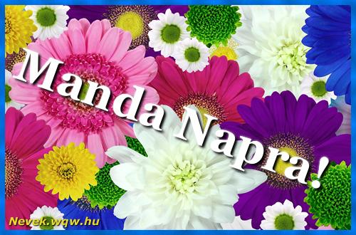 Színes virágok Manda névnapra