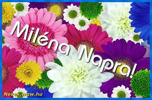 Színes virágok Miléna névnapra